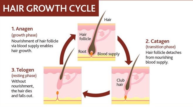 how hair grows